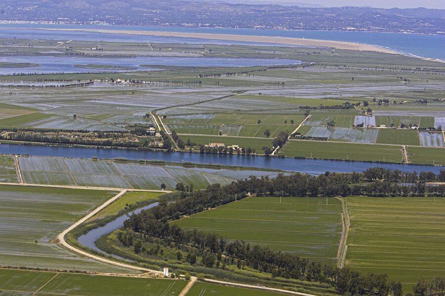 Paisatge característic del Delta durant l'estiu